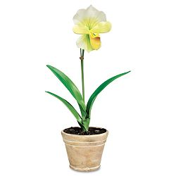 "Artificial White Lady Slipper in a Terra Cotta Pot 18"" Overall Height (BAU98042)"