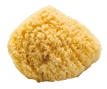 Natural Bath Sea Sponge 7""