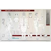 The Points And Meridians Of Acupuncture Chart (573