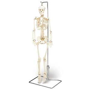 "Mr. Thrifty Skeleton 33.25"" Tall (652 0004)"