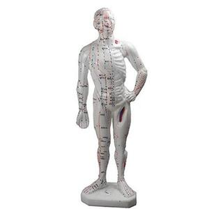 "Acupunture Points - Human Body Model - 10"" (176 0149)"