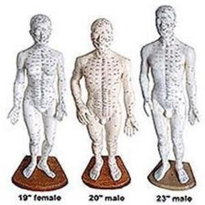 "Acupunture Points - Female Body Model - 19"" (176 0147)"