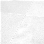 "White Marble Honed 12"" x 12"""