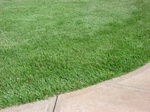 Bulldog 51 Tall Fescue - 20 Lbs.