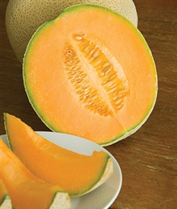 Cantaloupe Hales Best Seed - 1 Packet