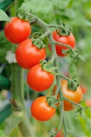 Cherry Tomato Heirloom Seed - 1 Packet
