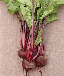 Beets Early Wonder Seed - 1 Packet