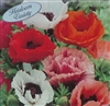 Oriental Poppy Pizzicato Mix Seed Heirloom - 1 Packet