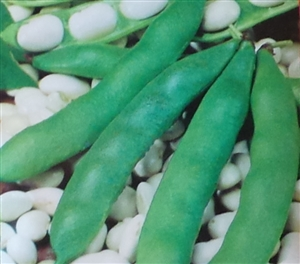 Garden Beans Henderson's Lima Seed - 1 Packet