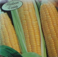 Sweet Corn Kandy Korn Seed Heirloom - 1 Packet