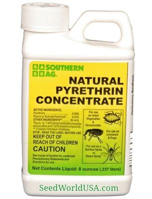 Natural Pyrethrin Concentrate - 8 Oz