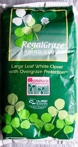 Regal Graze Ladino Clover Seed - 1 Lb.