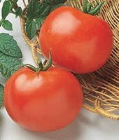Rutgers Tomato Seeds - 1 packet