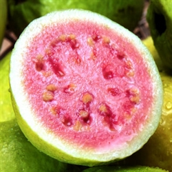 Guava Aroma - Oil Based