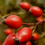 Rosehip Extract - Water Based