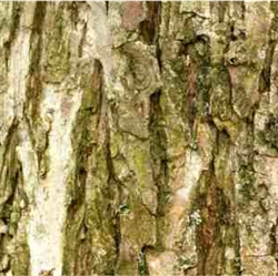 Willow Bark Extract - Water Based