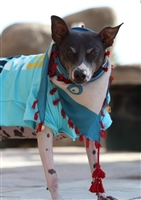evil eye designer dog scarf for dogs