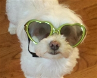 green heart shaped sunglasses for dogs