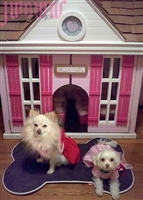 jwowws dog house