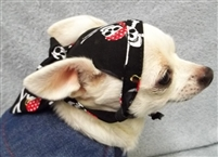 pirate skull doo rag for dogs