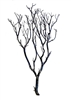 "Semi-Gloss Black Manzanita Branches, 24"" Tall"