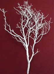 "White Manzanita Branches, 30"" tall"