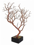 "Natural Manzanita Branch, 24"" Tall with Base Included"