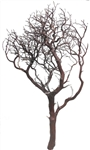 "Natural Red Manzanita Branches, 36"" Tall"