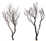"Natural Red Manzanita branches, 48"" (case of 2, shipping included!)"