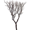 "Natural Red Manzanita, 60"" (case of 5)"
