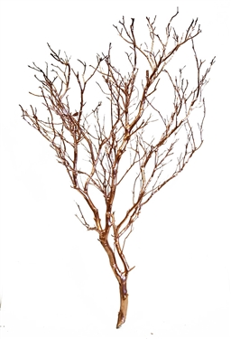 "Rose-Gold Metallic Manzanita Branches, 24"" Tall"
