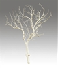 Sandblasted Manzanita Branches, 24 inches tall
