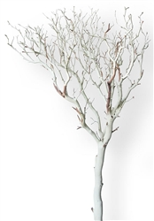 "Sandblasted Manzanita Trees, 84"" (case of 3)"