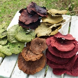 Sponge Mushroom on Stem, assorted colors