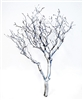 "Silver Metallic Manzanita Branches, 24"" Tall"