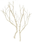 8 Sandblasted Manzanita Fillers, 24 inch (shipping included!)