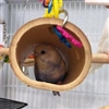 Keet in hanging Bamboo Tunnel