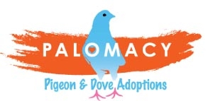 The Palomacy Pigeon & Dove Foster Network