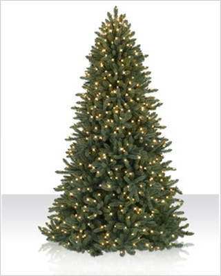 5.5 Foot Colorado Blue Spruce Clear Christmas Tree