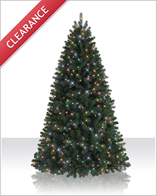 7 Foot Northeastern Spruce Christmas Tree with Multi Lights