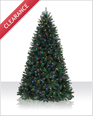 5.5 Foot Northeastern Spruce LED Christmas Tree with Multi Lights