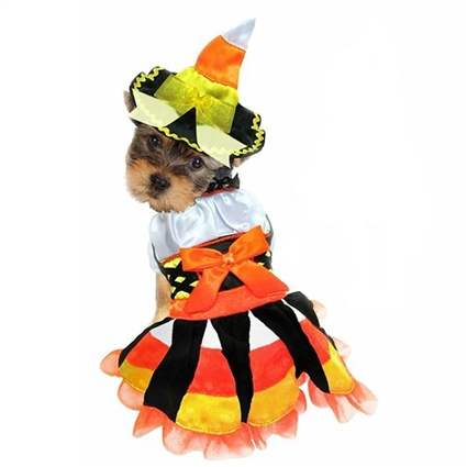 Halloween Dog Costume | Candy Corn Witch