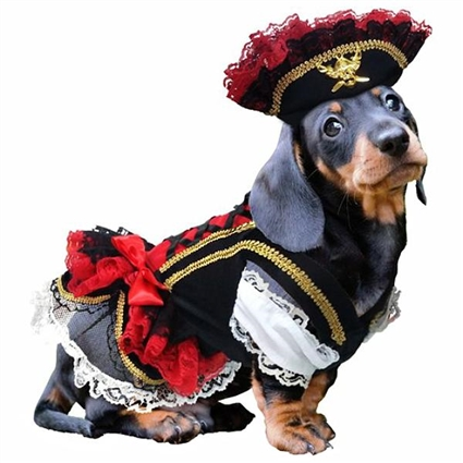 Swashbuckler Pirate Girl Halloween Dog Costume