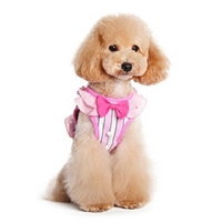 Sweet Lady Small Dog Harness