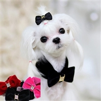 Velvet Luxury Bow Tie Dog Collar