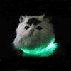 L.E.D. Lighted Cat Collars