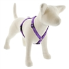 "Lupine 3/4"" Jelly Roll 12-20"" Roman Harness"