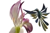 Hummingbird and Orchids - Genuine Oaxacan Alebrije for Sale