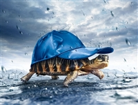 Turtle Tortoise with Hat Wall Decal