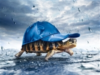 Turtle Tortoise Hat In the rain  RV Trailer or Wall Mural Decal Decals Graphics Sticker Art